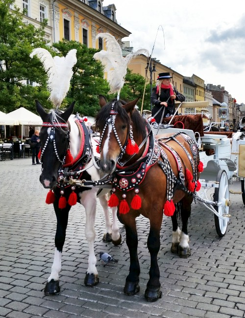 Krakow horse-drawn carriage
