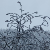 ojcowski-park-narodowy-zwidzanie (8)