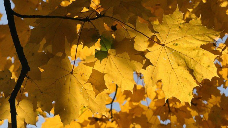 jesien na plantach