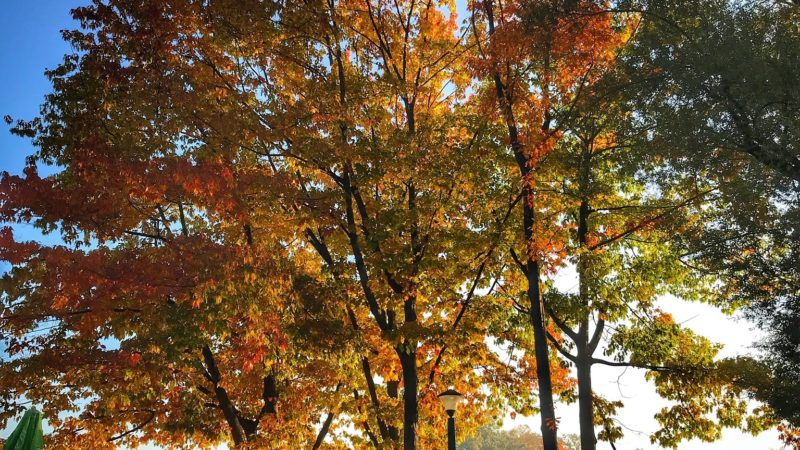 jesien nowa huta
