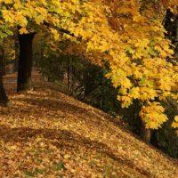jesien park podgórski